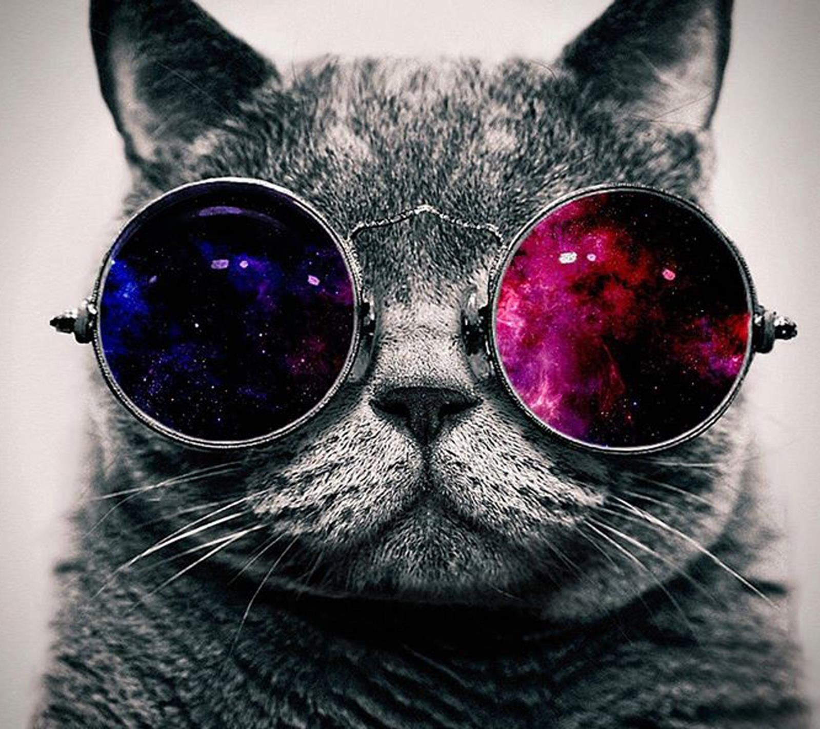 Un gatto con gli occhiali da sole - Sfondi per Android, i più belli da scaricare gratis