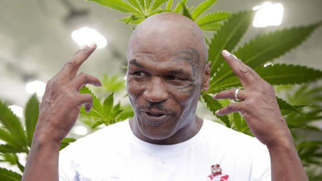 Mike Tyson circondato da cannabis