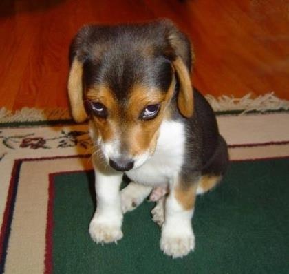 Un cane con espressione molto dispiaciuta