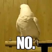 Un pappagallo che scuote la testa - GIF di reazione ai commenti, le più divertenti da usare su Whatsapp e Facebook