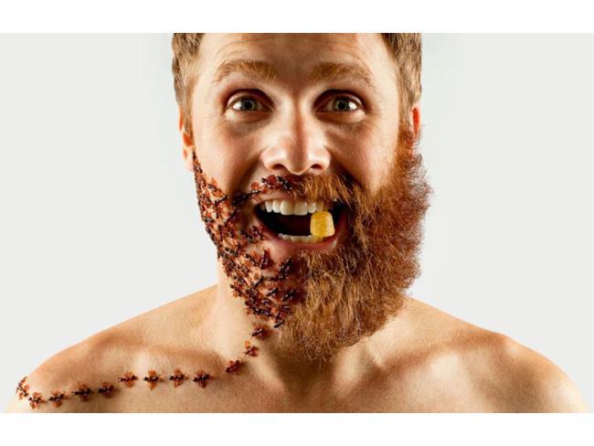 Formiche sostituite alla barba
