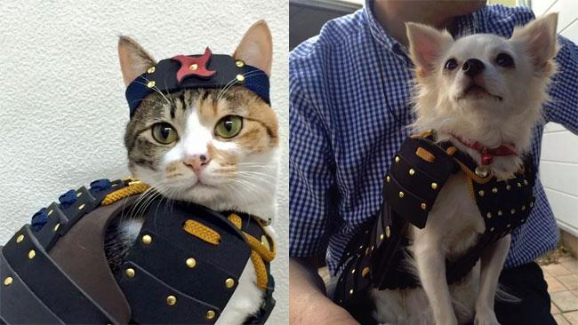 Un micio e un cane con indosso un costume da samurai giapponese