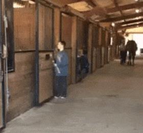 Un ragazzo spinge un pony fuori dalla sua stalla - Le GIF più divertenti da scaricare e condividere su Facebook e WhatsApp