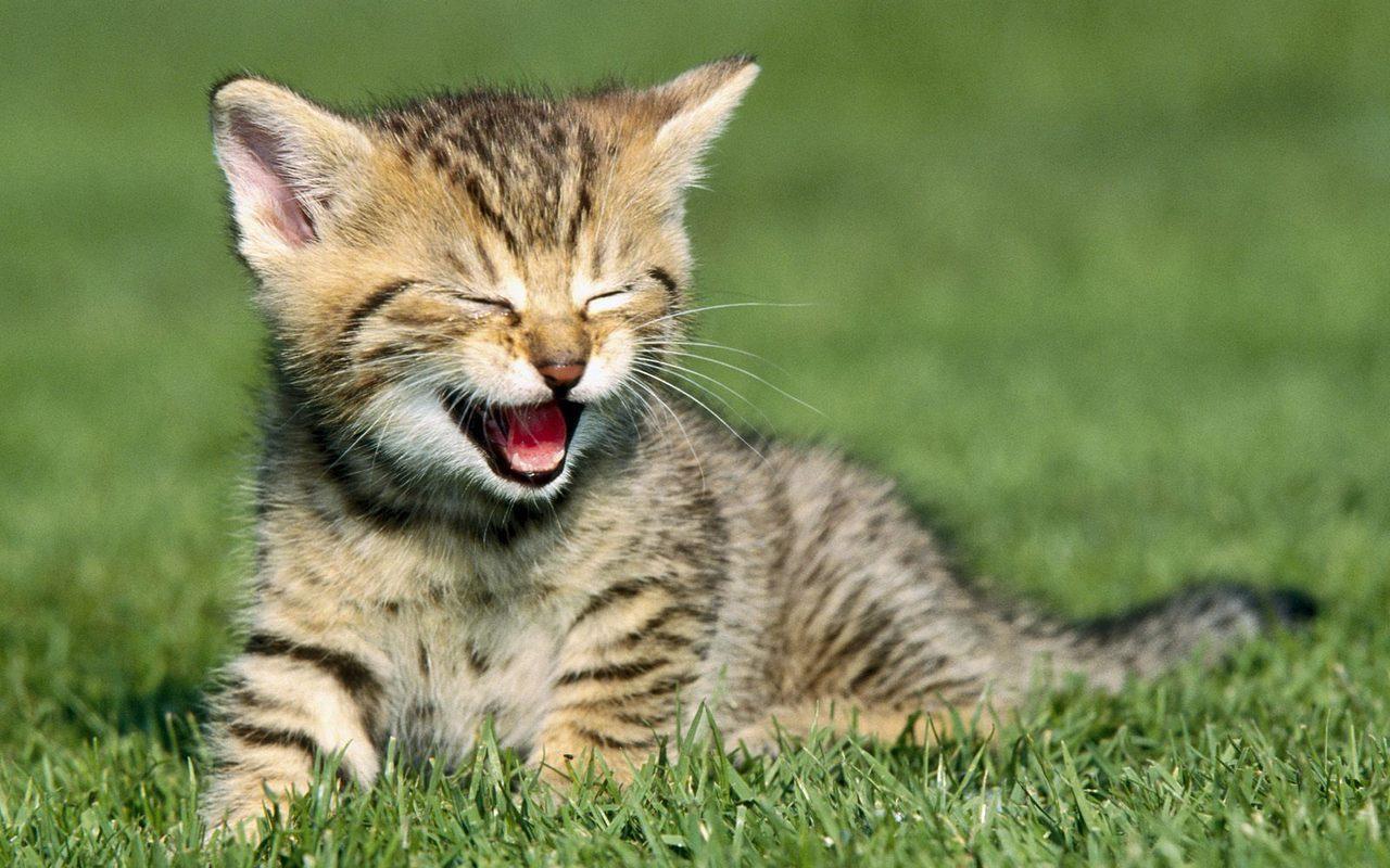 Un gattino nel prato