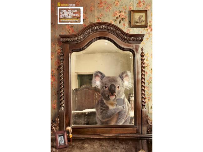 Koala allo specchio della camera da letto - Descrizione della camera da letto ...