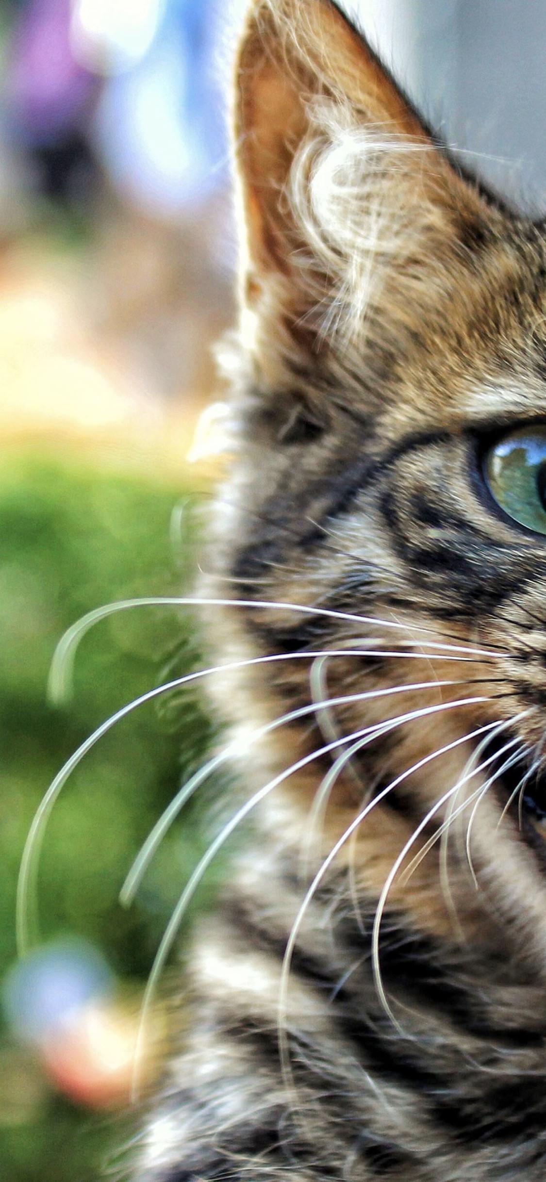 Primo piano di un gatto - Sfondi per iPhone, i migliori da scaricare gratis