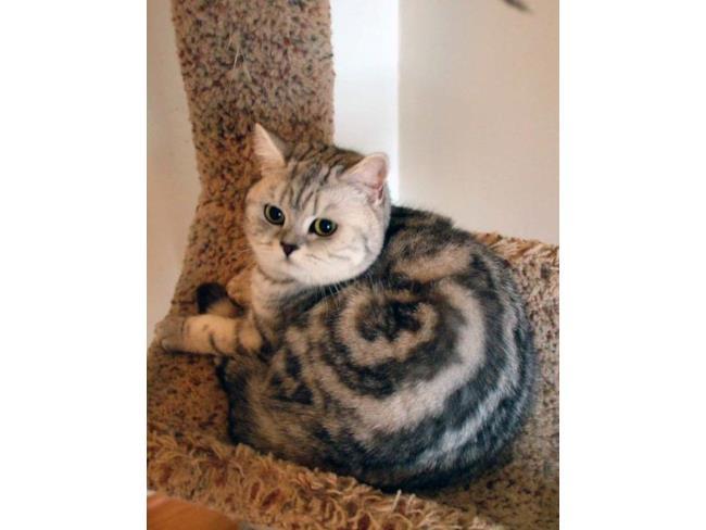 Un gatto col vortice