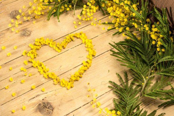 Un cuore fatto con i fiori di mimosa - Immagini per la Festa della Donna