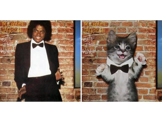 Il gatto come Michael Jackson