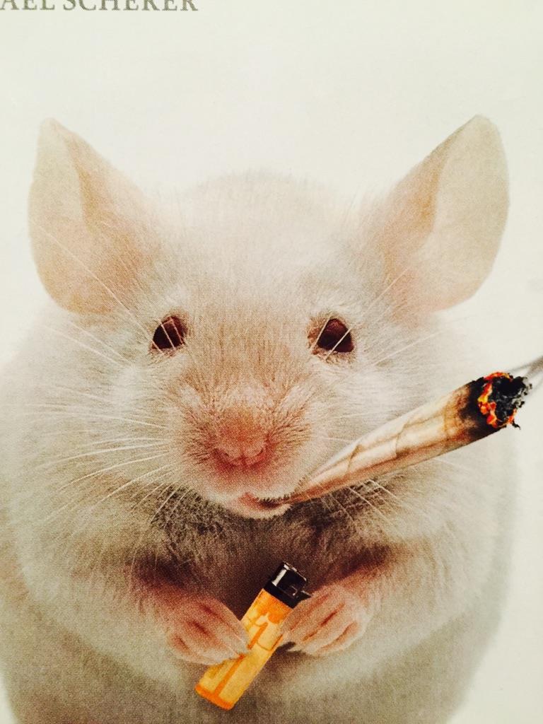 La foto di un topo