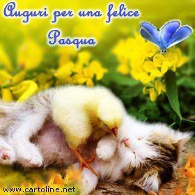 Un tenero gattino - Immagini per auguri di Buona Pasqua