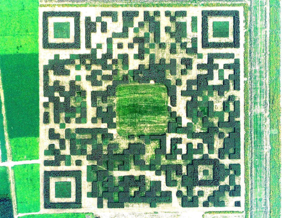 Un'immagine del QR code modificata visto dall'alto