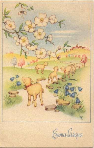 Degli agnelli in una strada di campagna - Immagini per auguri di Buona Pasqua