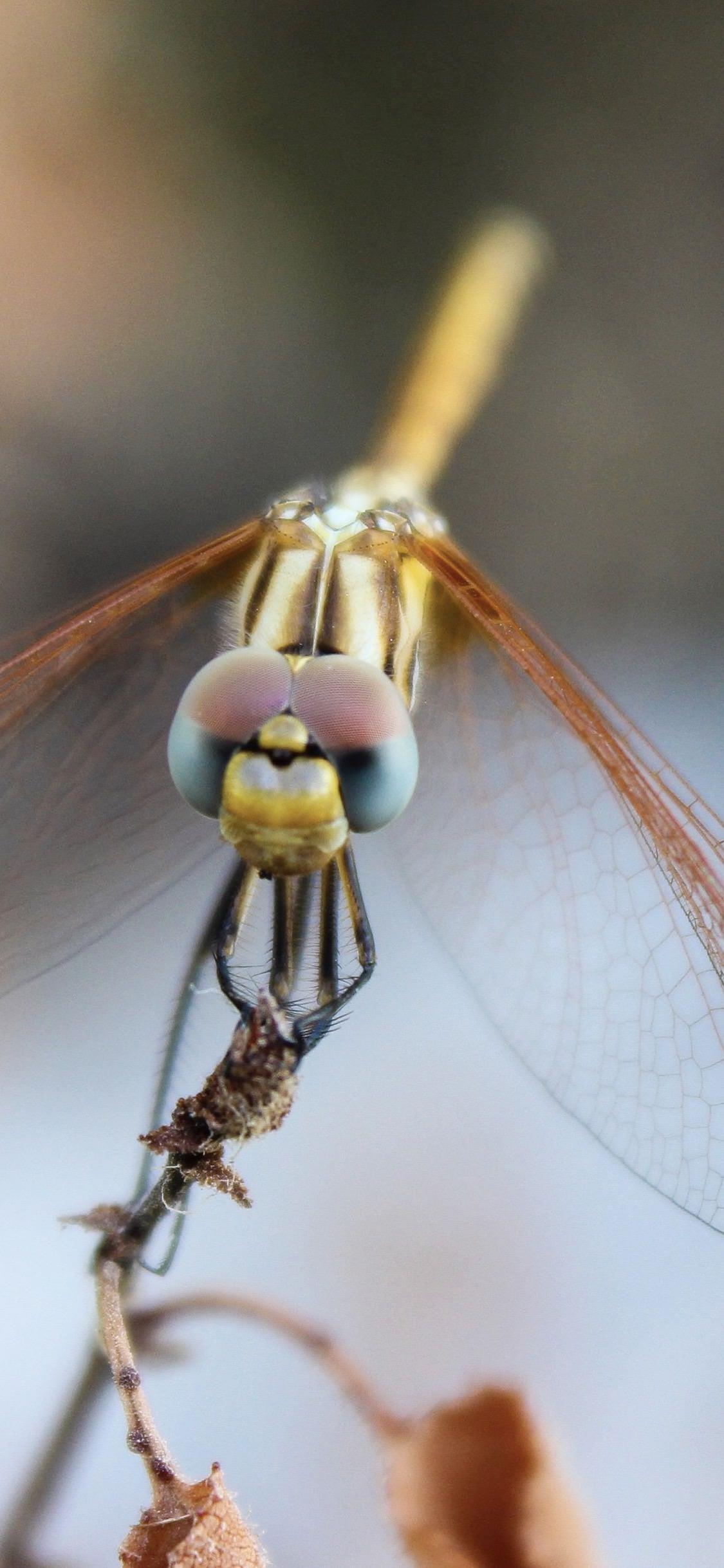 Una libellula - Sfondi per iPhone, i migliori da scaricare gratis