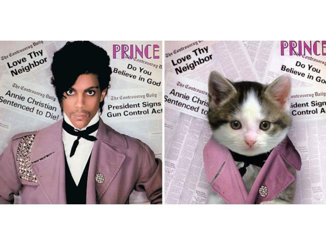 Il gatto come Prince