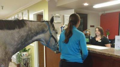Il cavallo e la ragazza aspettano alla reception