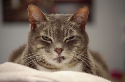 Un gatto sospetto