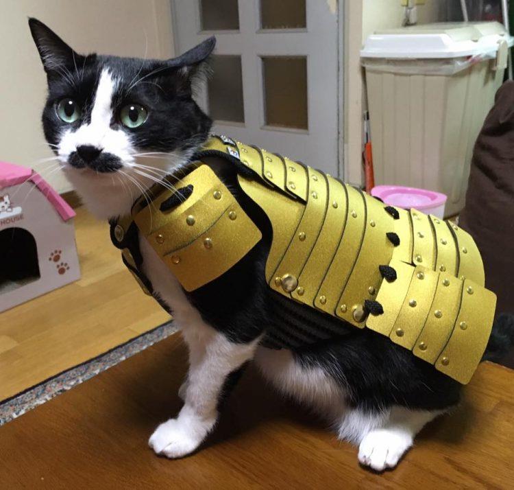 Foto di un gatto con l'armatura giapponese