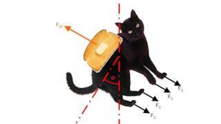 La produzione di energia infinita tramite un gatto