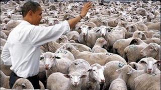 Obama e delle pecore