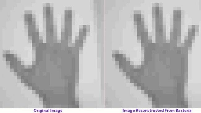Alcuni fotogrammi del film impiantato nel batterio