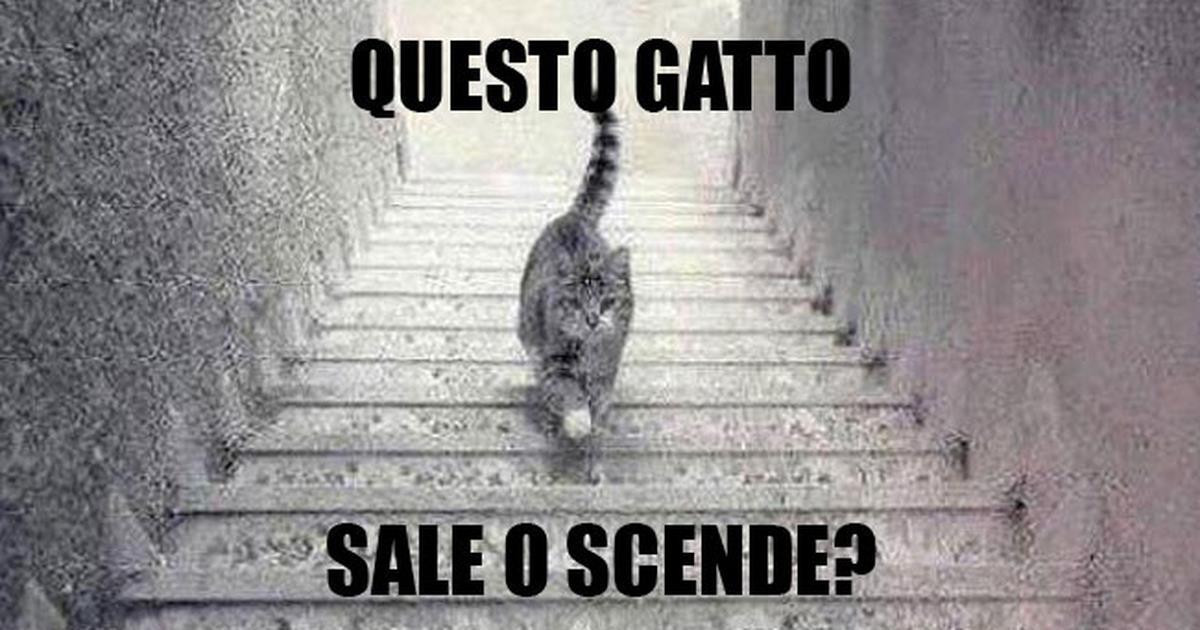 Questo gatto sale o scende le scale il dibattito infiamma for Sedia elettrica che sale le scale