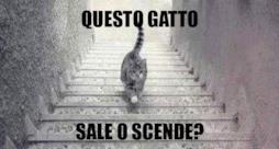 Il gatto che sale e scende le scale