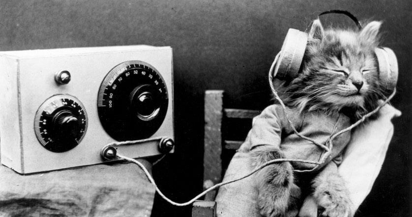 Foto di gatto che ascolta musica