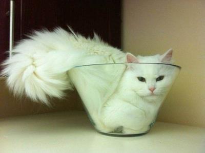 Un gatto incastrato nella vetreria