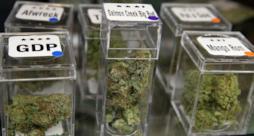 Alcuni barattoli contenenti marijuana