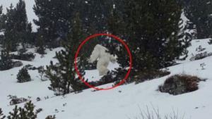 Uno degli avvistamenti presunti dello Yeti