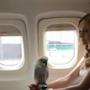 Pappagallo in aereo.