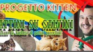 Progetto Kitten ha lanciato l'idea dei Gattini Su Salvini