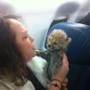 Un piccolo cucciolo esotico in aereo.