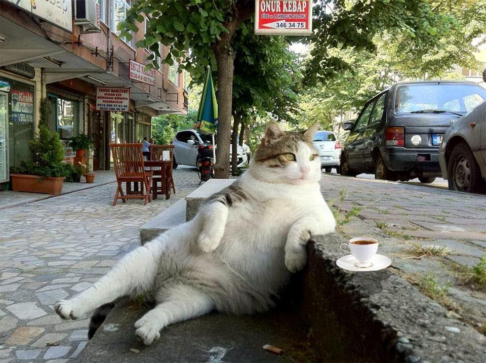 Gatto su una panchina che prende il caffè