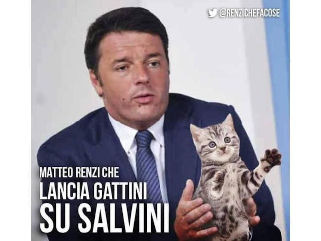 Matteo Renzi partecipa (involontariamente) a #gattinisusalvini