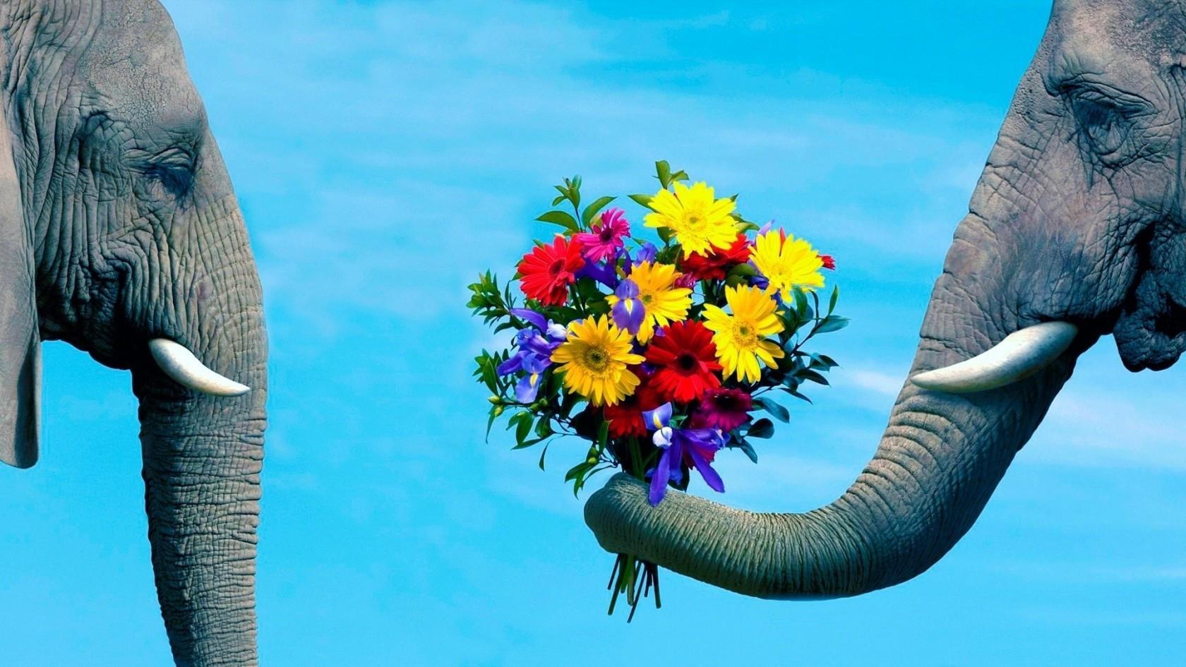 Due elefanti e un mazzo di fiori - Sfondi per PC, iPhone, Android e profilo WhatsApp da scaricare