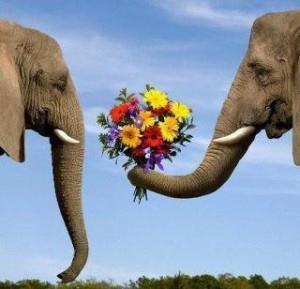 Un elefante offre dei fiori a un altro elefante