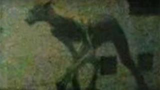 La foto della misteriosa creatura di Santa Fe
