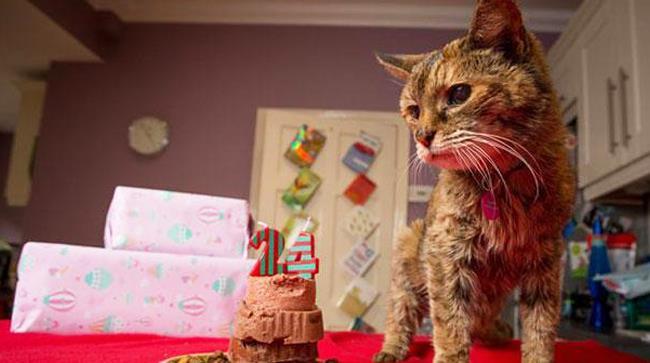 Il gatto Poppy è il più vecchio del mondo