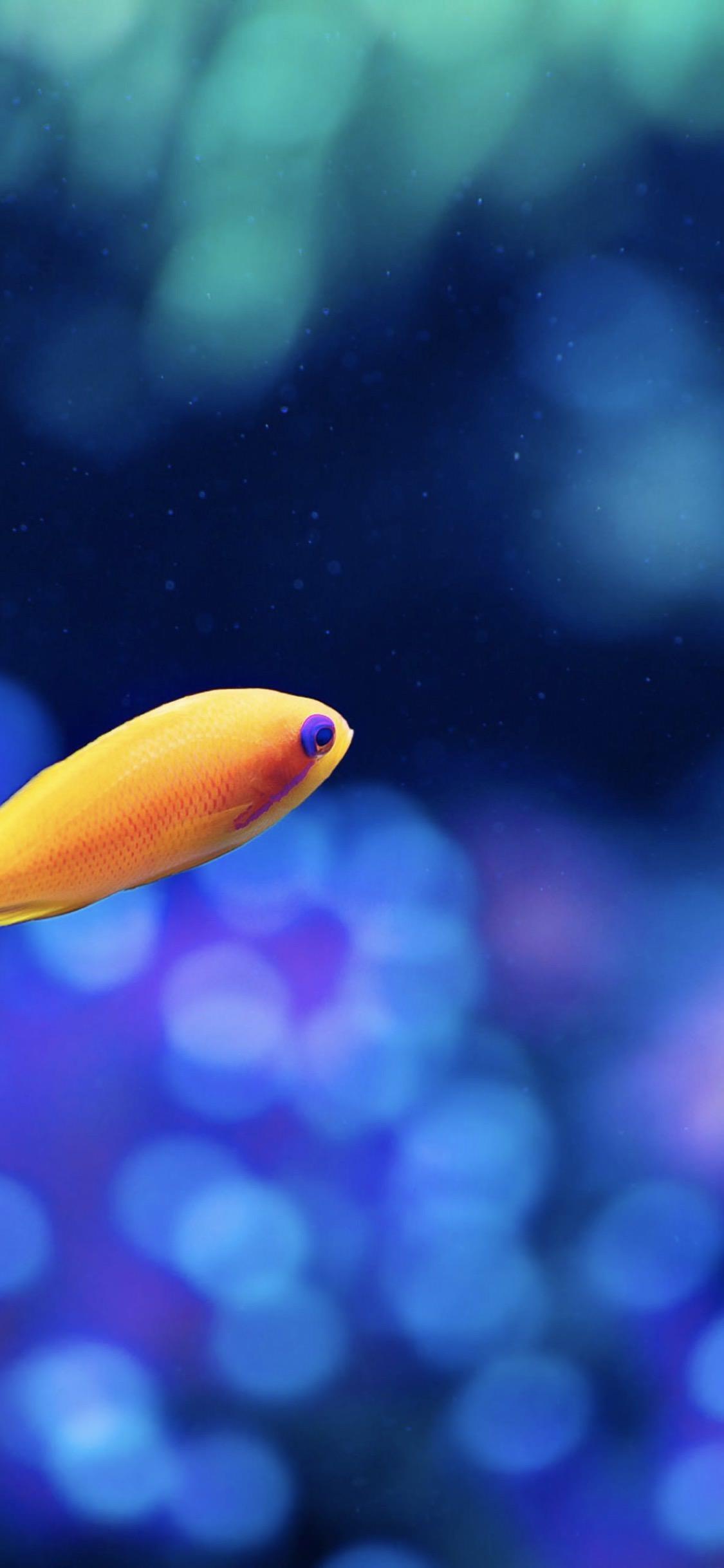 Un bellissimo pesce tropicale - Sfondi per iPhone, i migliori da scaricare gratis