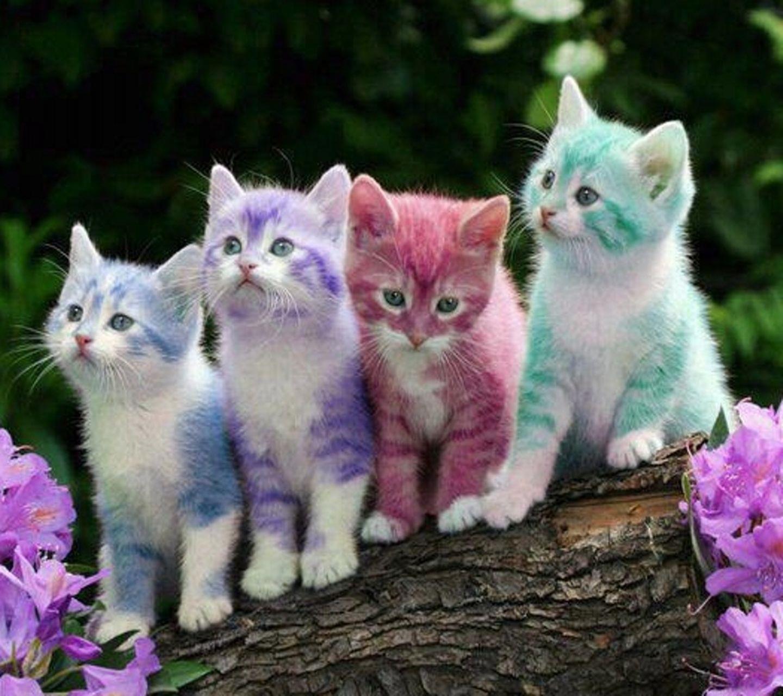 Dei simpatici gattini colorati - Sfondi per Android, i più belli da scaricare gratis