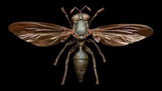 Gli insetti che sembrano alieni robot