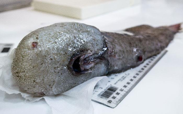 Un Il pesce senza faccia