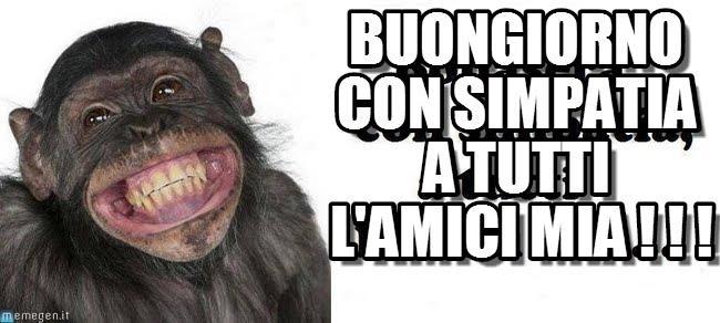 uno scimpanzé che ride