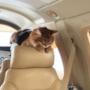 Un gattino in aereo.