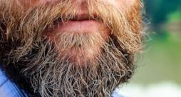 La barba hipster è un covo di batteri e feci