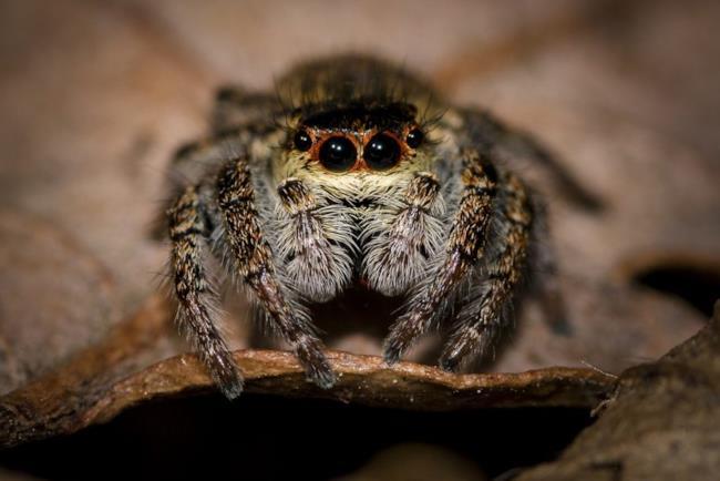 Un ragno visto da vicino.