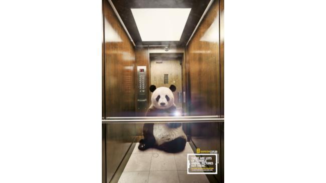 Panda che si fa un selfie in ascensore