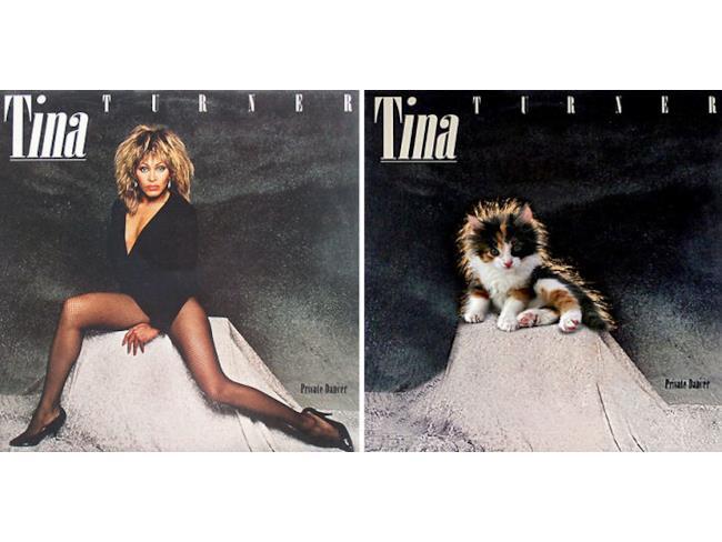 Un gatto come Tina